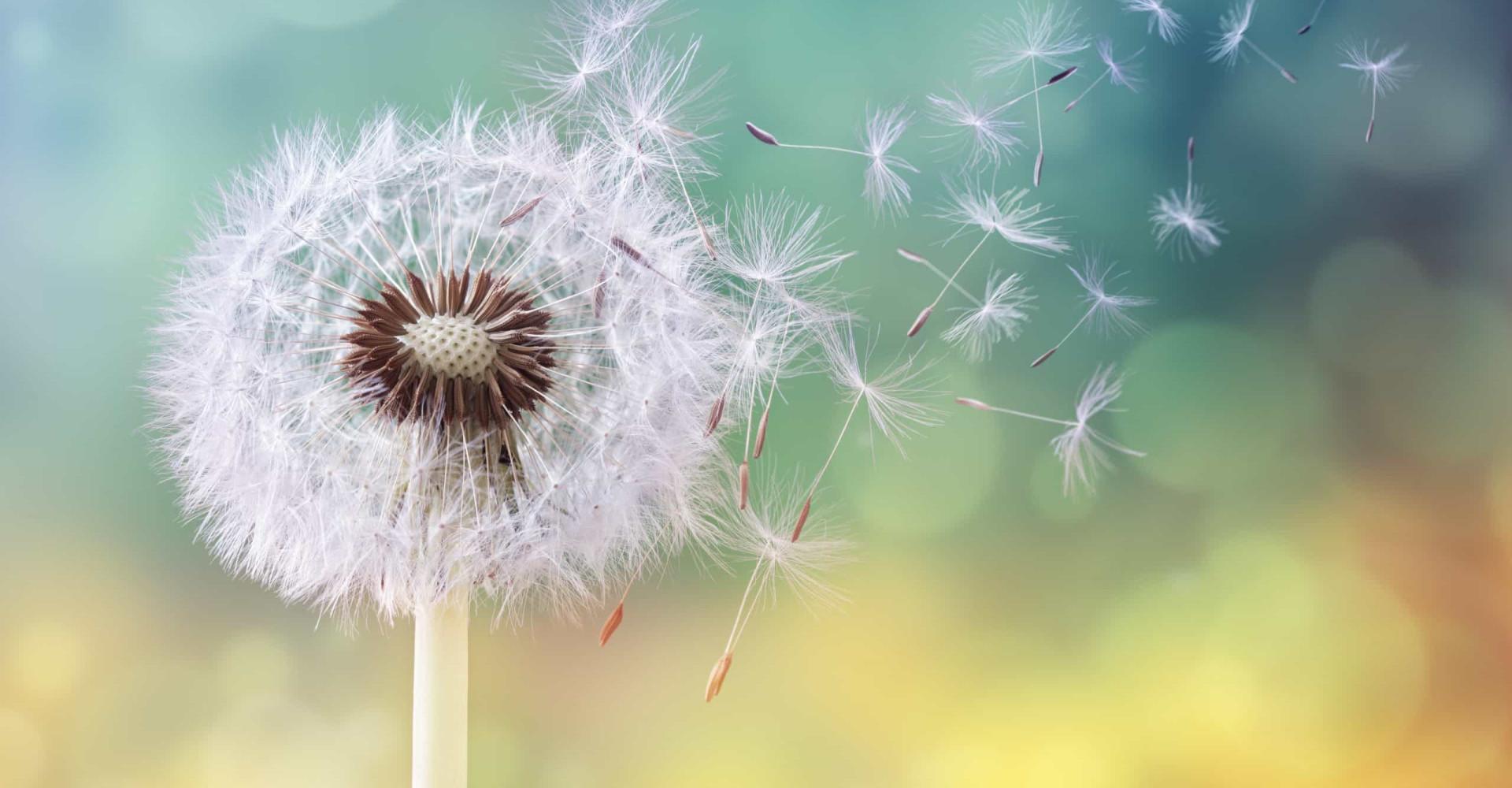 Dit bloemetje helpt je van je opgeblazen gevoel af