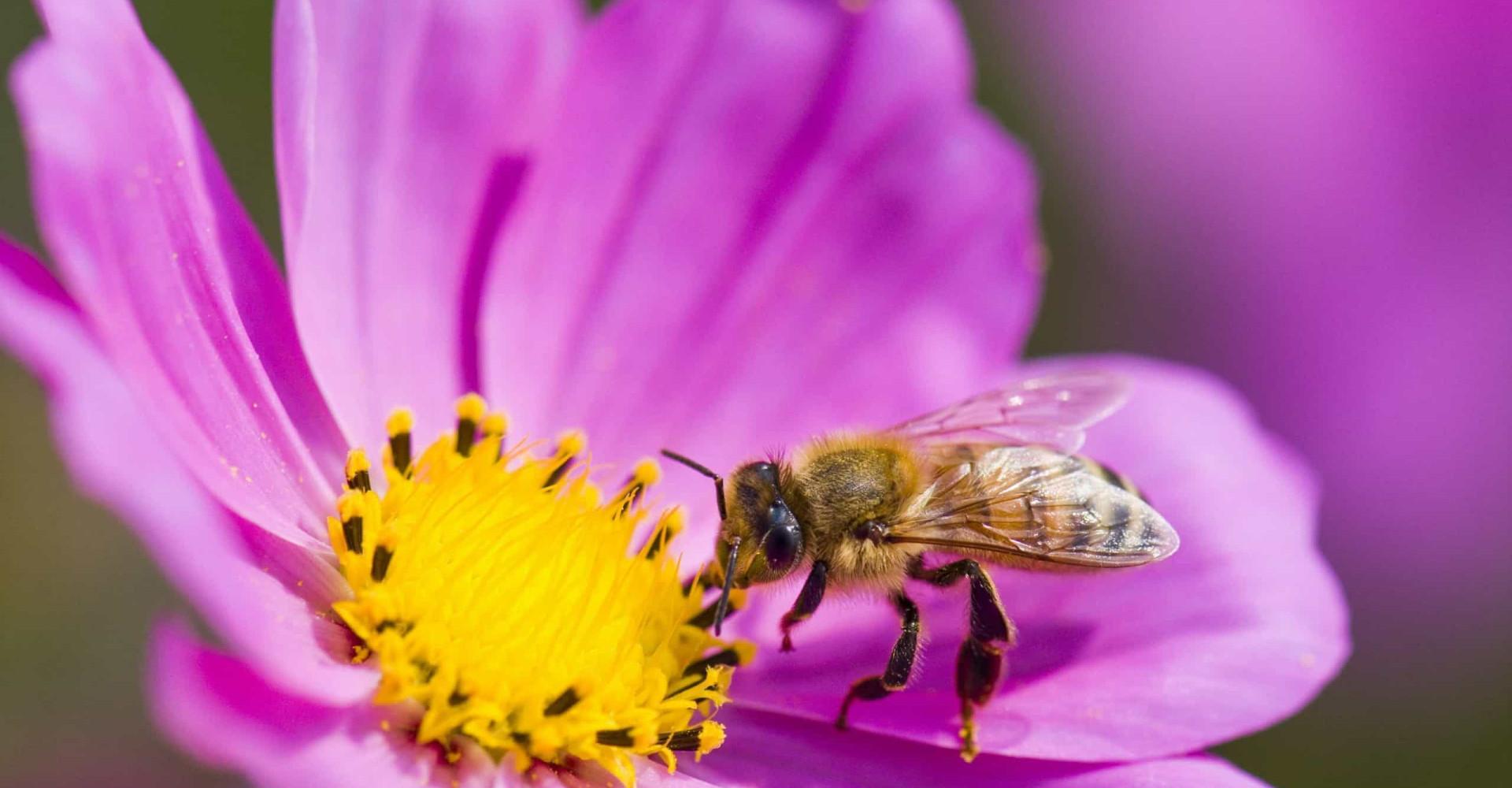 Bienensterben: So können Sie Bienen helfen!