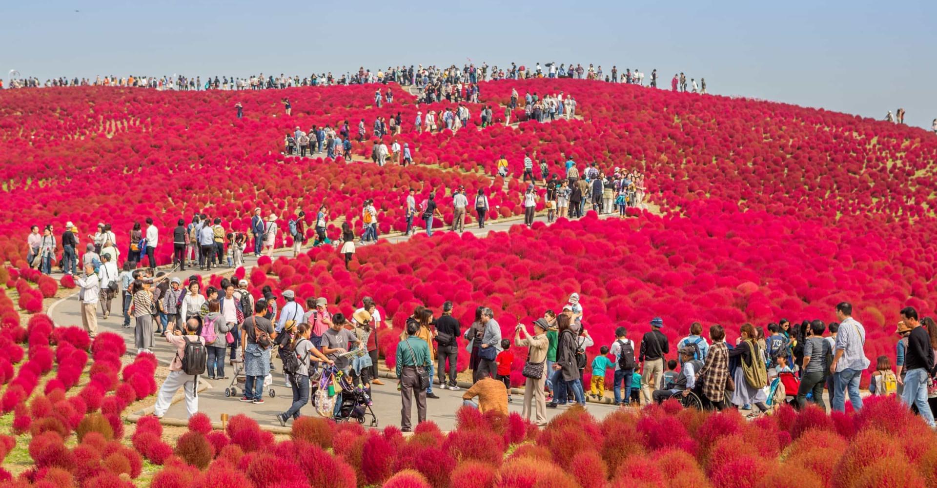 제대로 꽃을 감상할 수 있는 전세계의 꽃밭들!