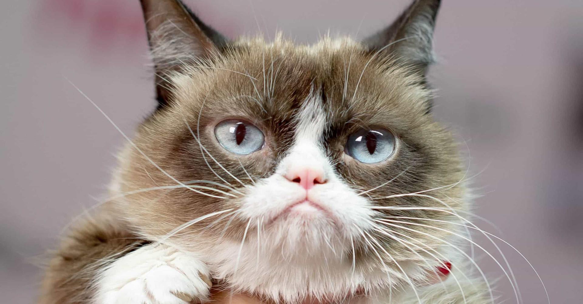 Lepää rauhassa Grumpy Cat: Elä uudelleen kissan hauskimmat meemit