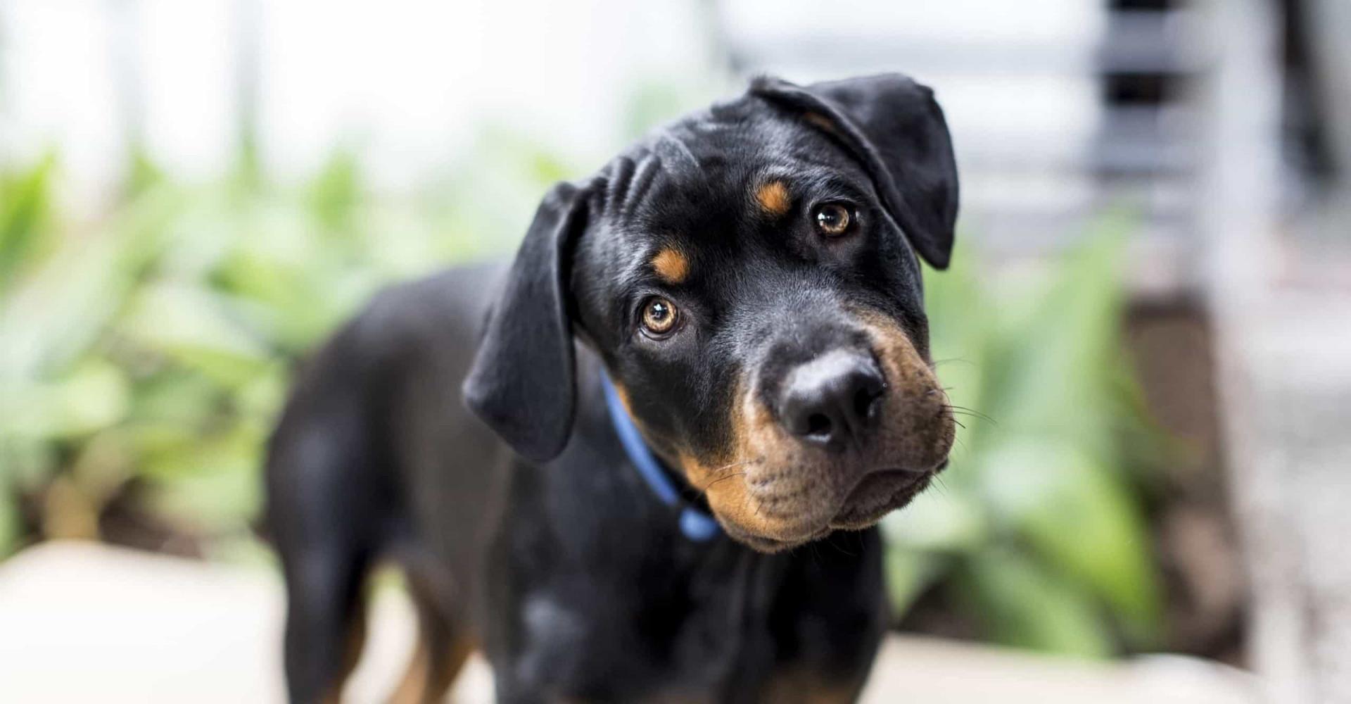 Waarom honden hun kop schuin houden wanneer je praat