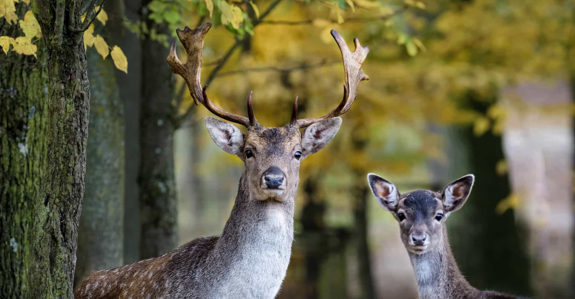 Why you should (or should not) kill Bambi