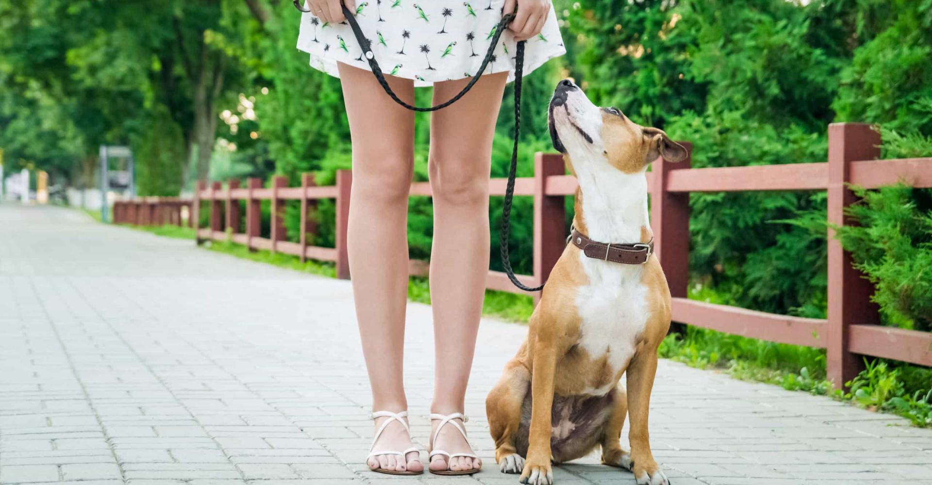 Luisteren honden beter naar vrouwen dan naar mannen?