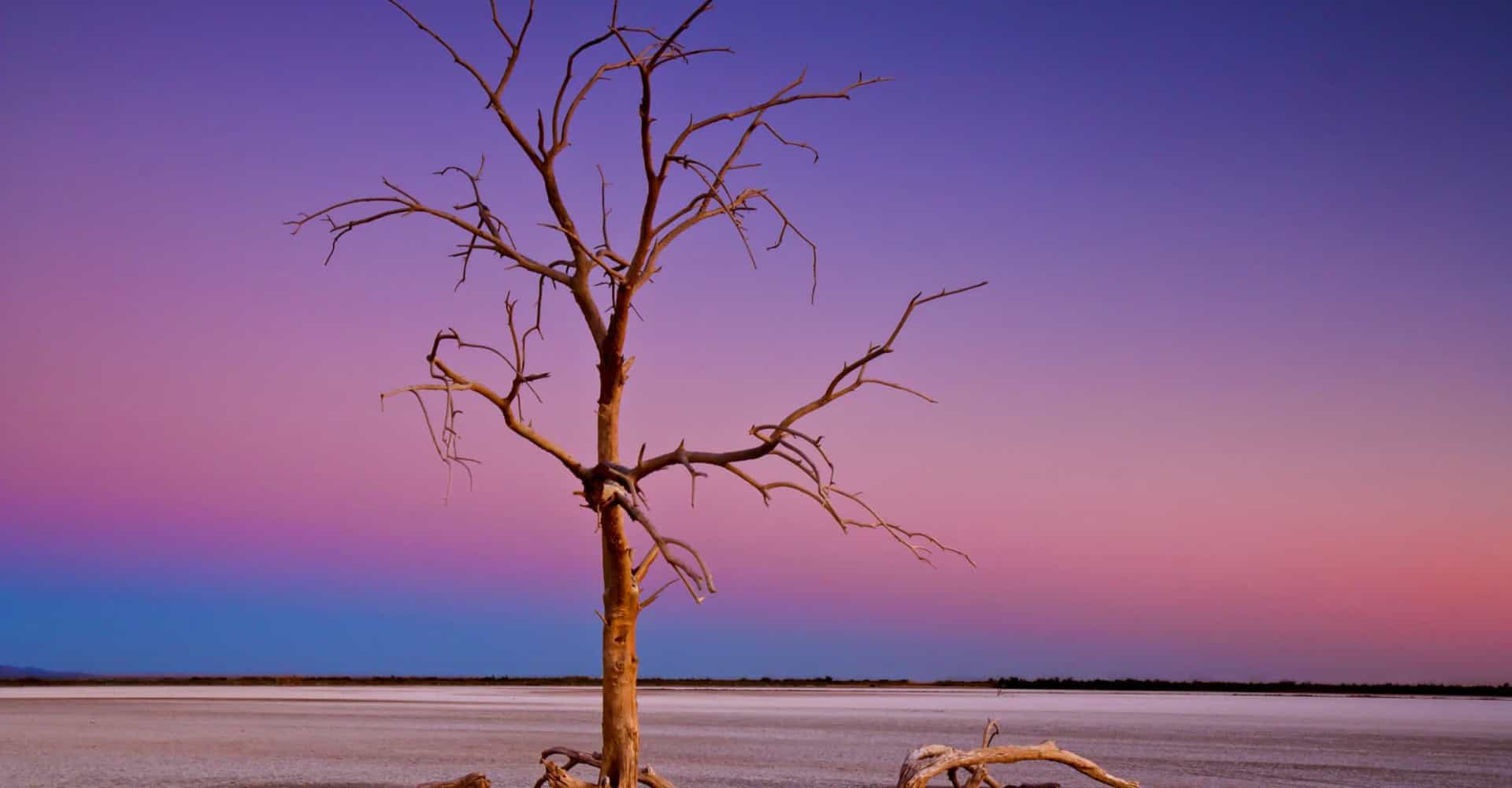 The Salton Sea: from paradise to purgatory