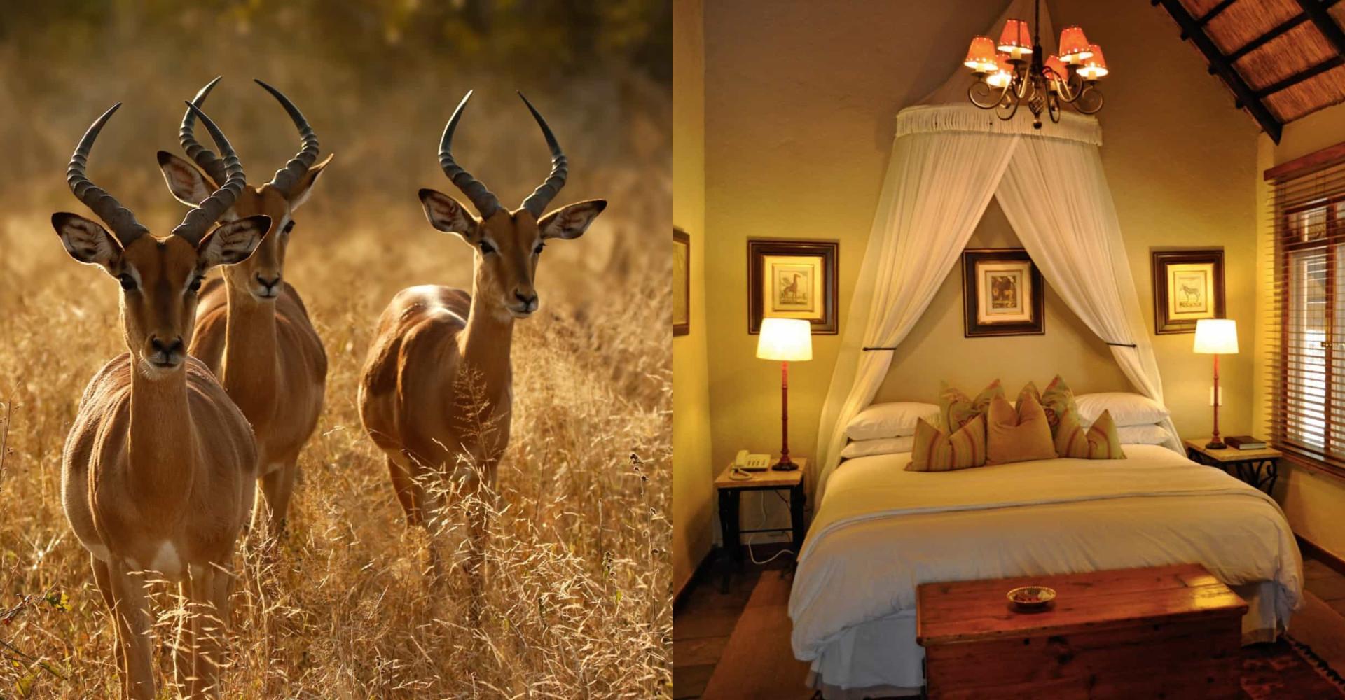 Kiinnostaisiko luksussafari Krugerin luonnonpuistossa?