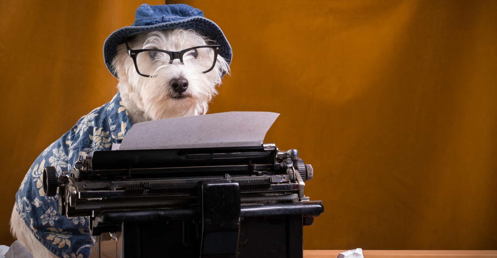 Vakantiewebsite zoekt hond als recensent