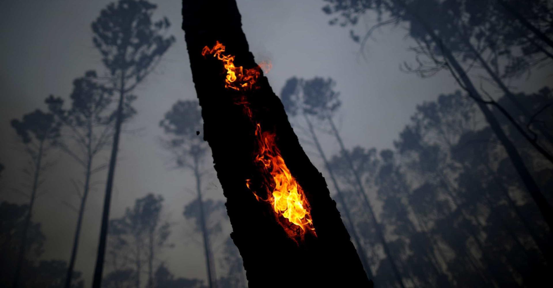Amazzonia: il polmone del mondo distrutto dalle fiamme