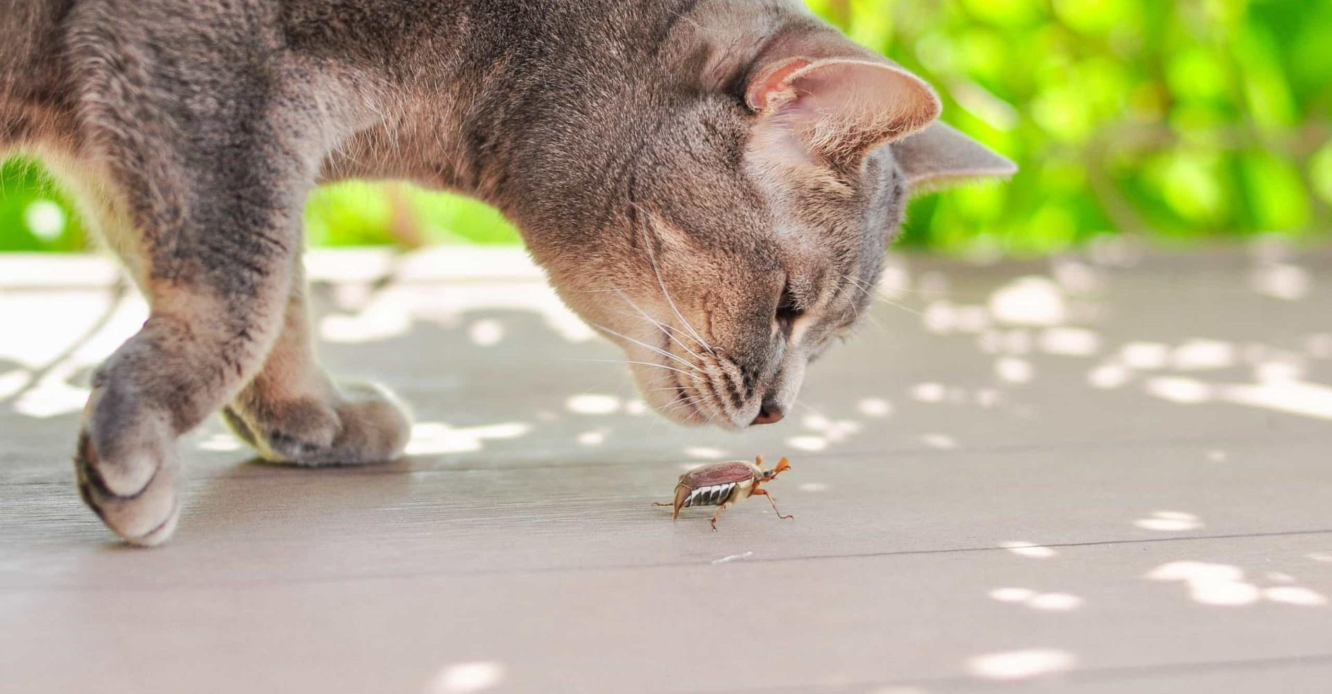Eten onze huisdieren binnenkort vooral insecten?