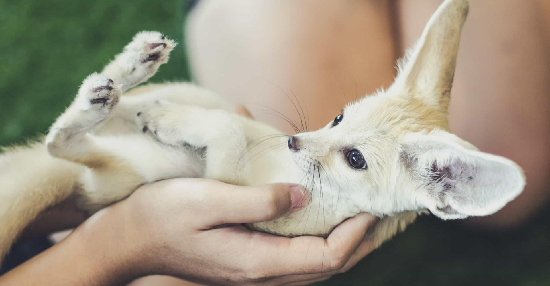 Fondez devant ces animaux plus craquants que nature!