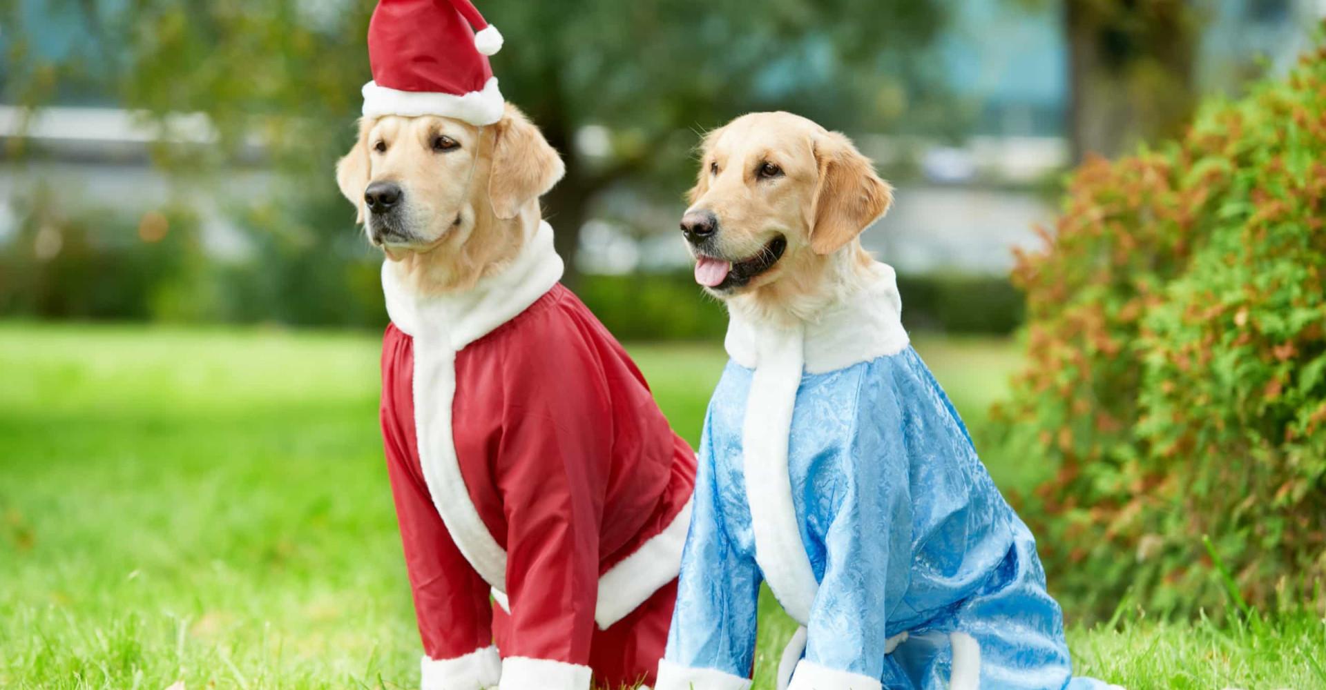 Zijn dit de meest stijlvolle honden op het internet?