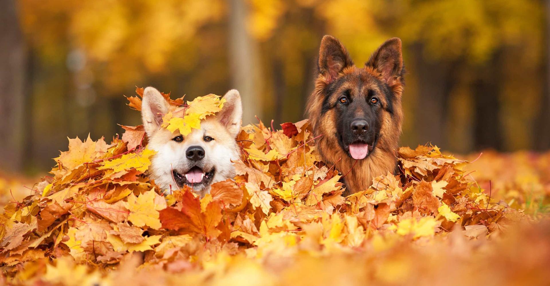 Let hier op als je een herfstwandeling maakt met je hond
