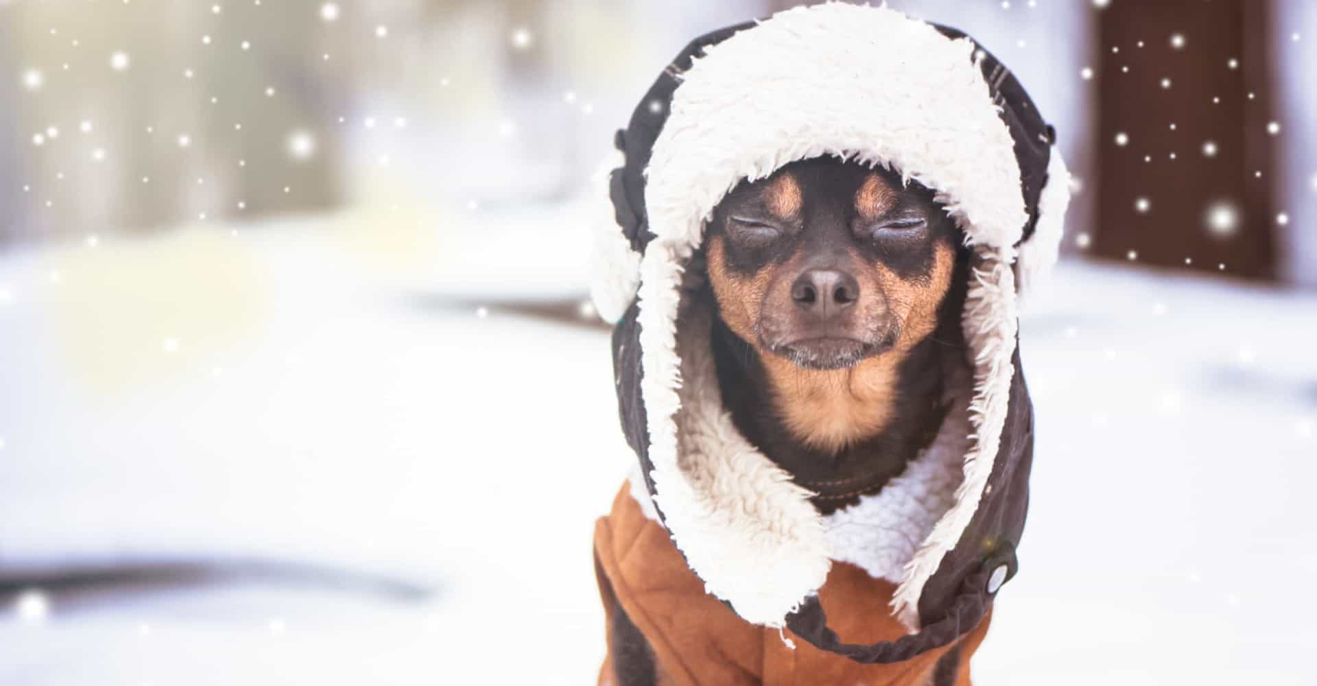 How to protect your pets during winter