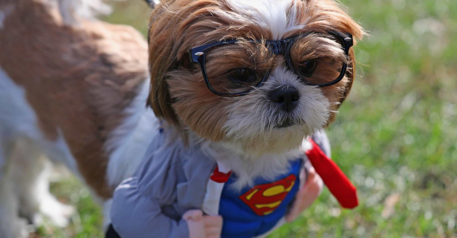Barkfest Halloween: les chiens aussi ont leur soirée déguisée