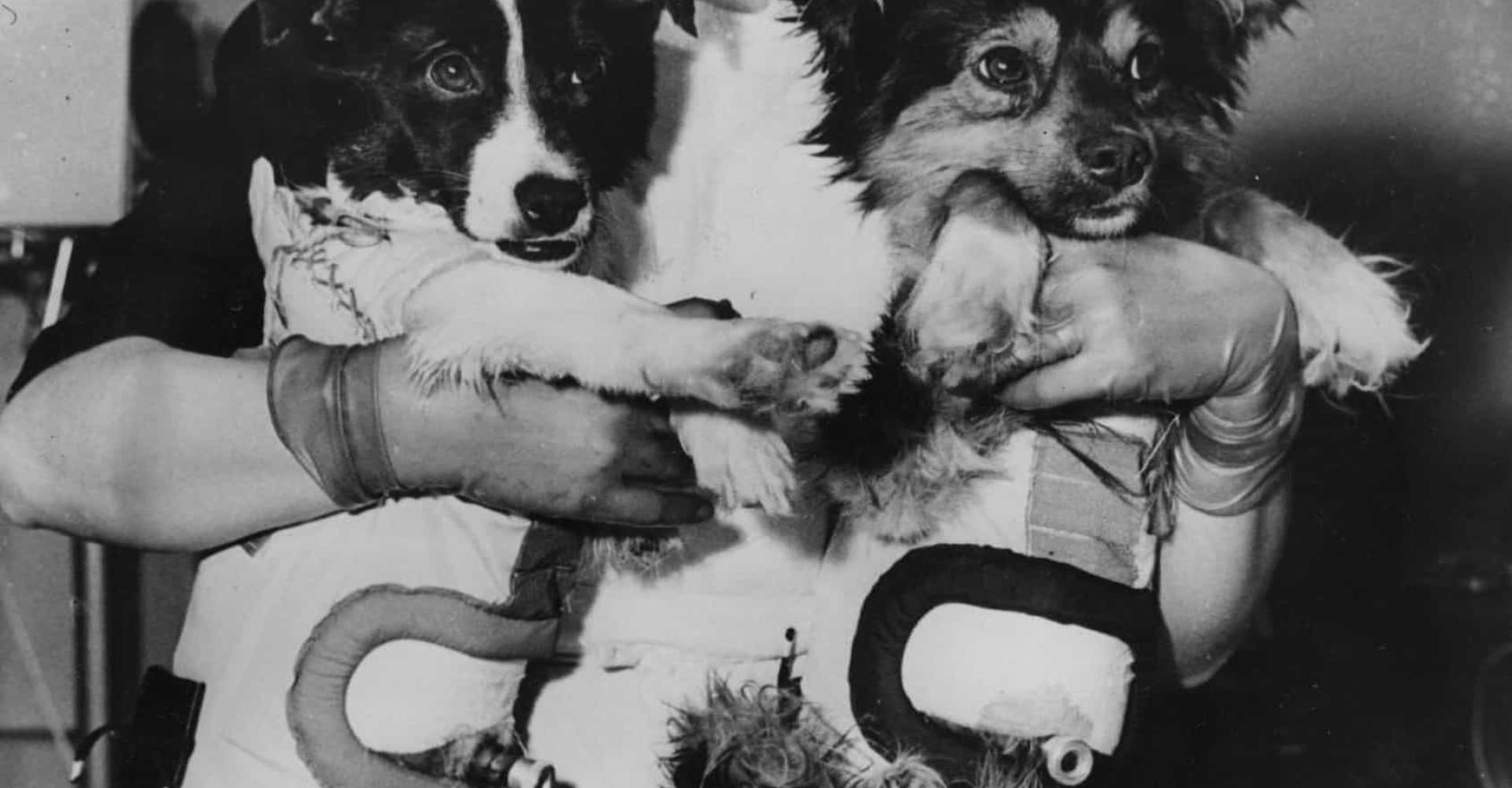 Les plus célèbres chiens de l'Histoire