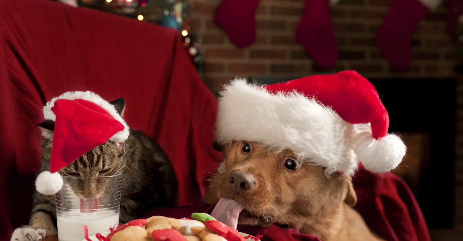 Adorable animals celebrating Christmas