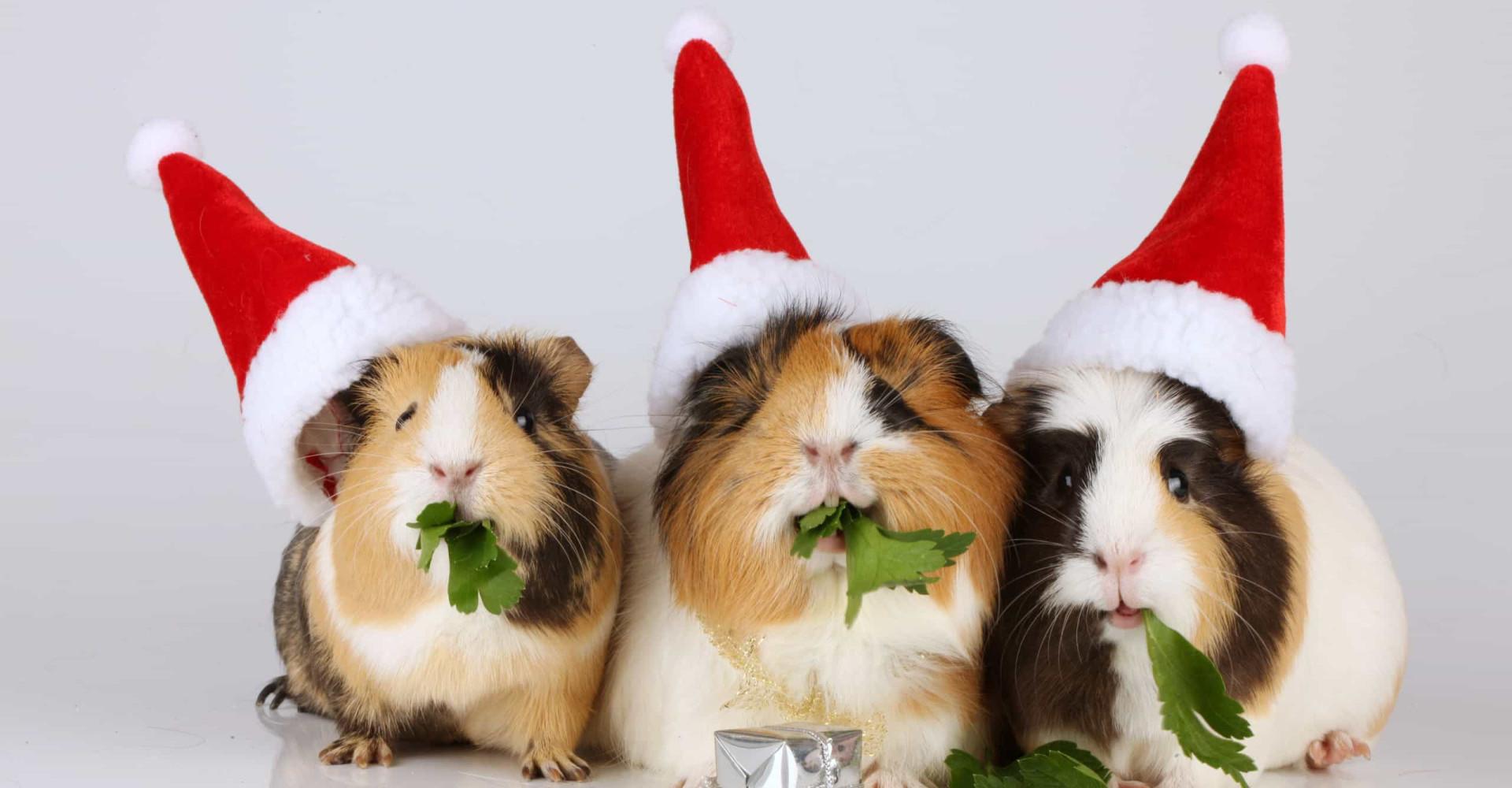 Søte dyr som feirer jul