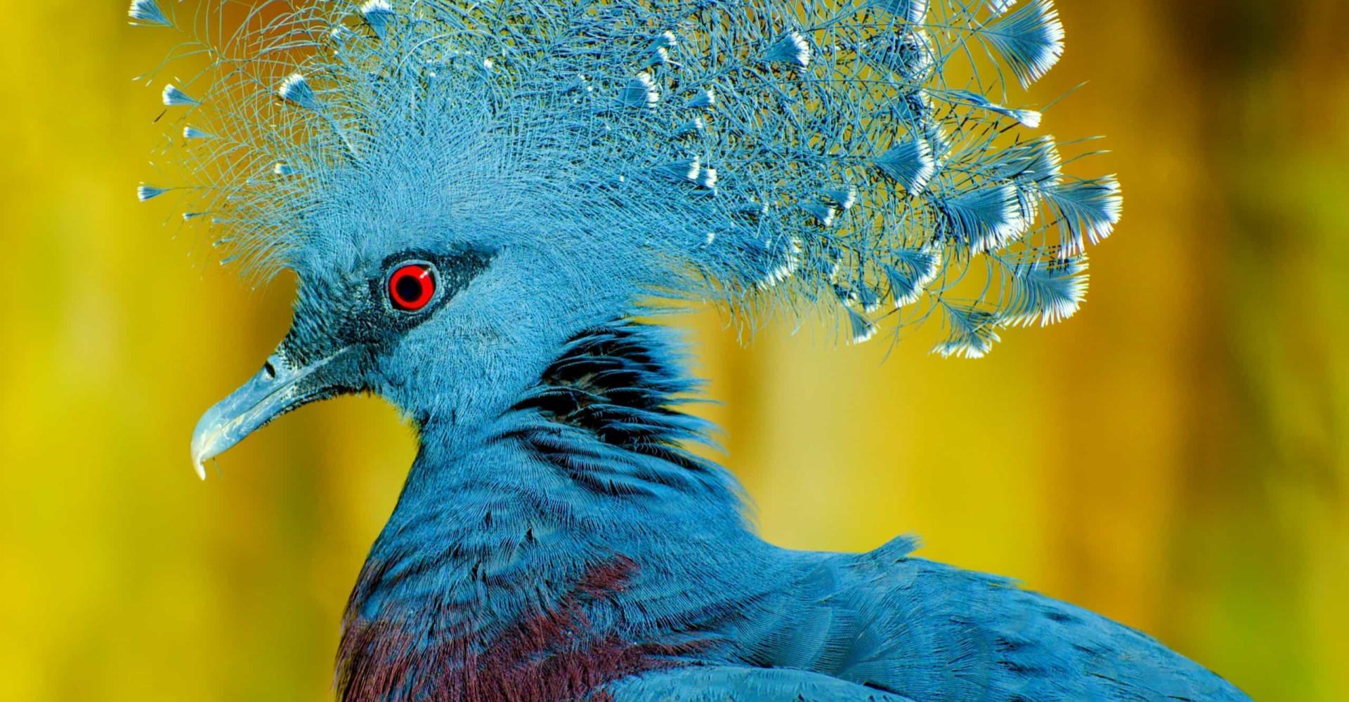 Kaunista väriloistoa: maailman eksoottisimmat linnut