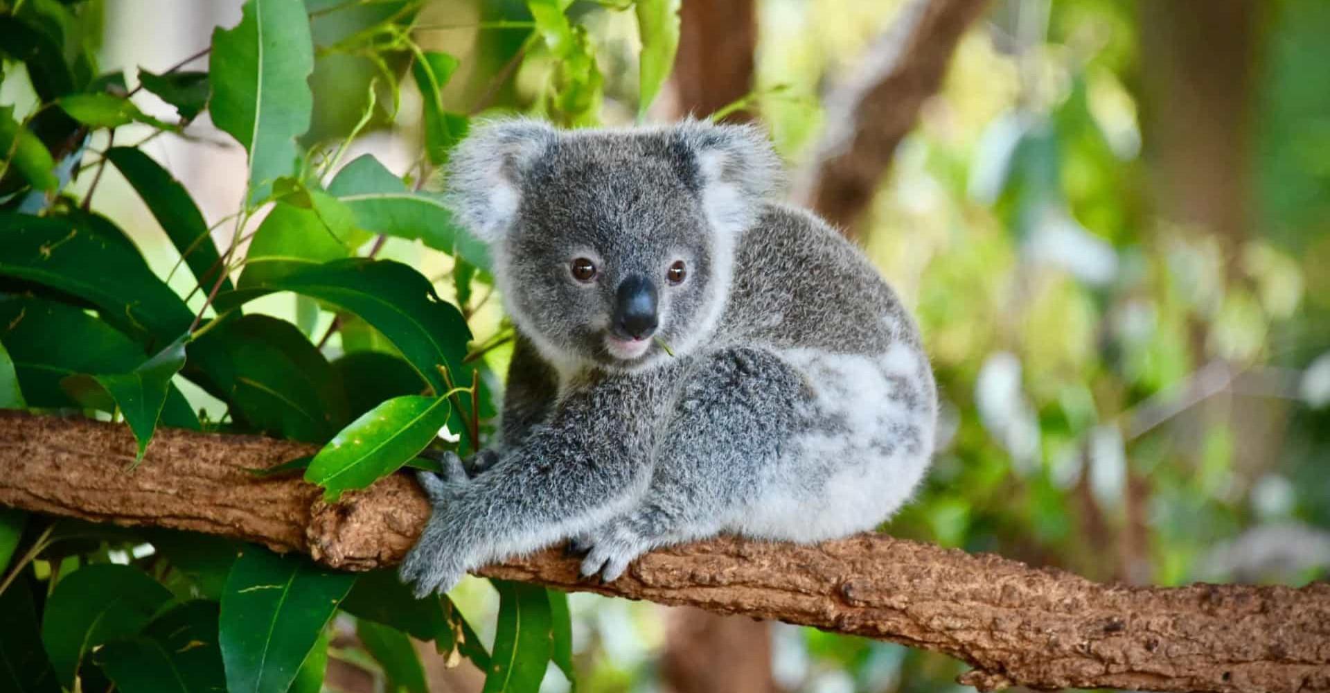 Ces animaux sont plus que jamais menacés d'extinction