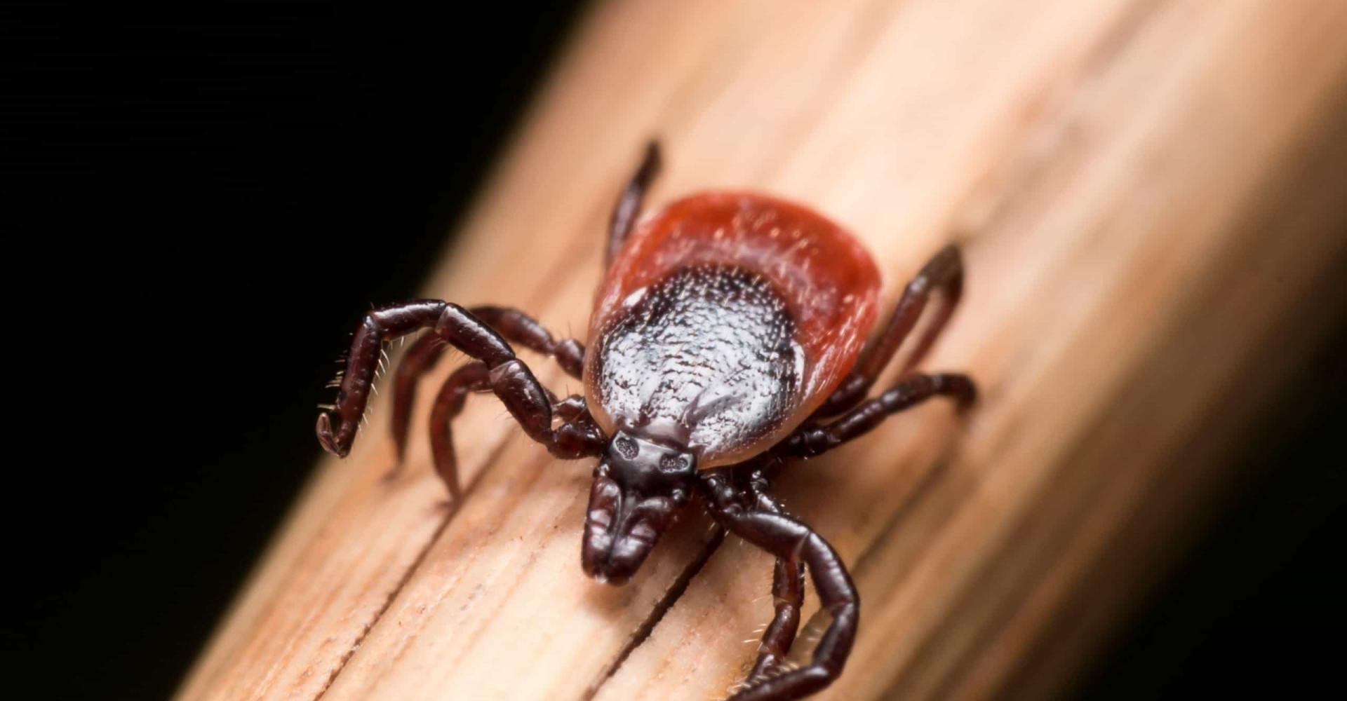Herken de symptomen van de ziekte van Lyme