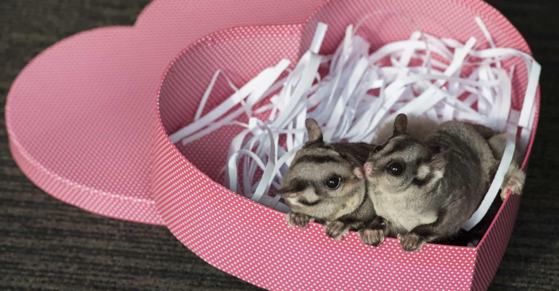 Des animaux mignons fêtent la Saint-Valentin