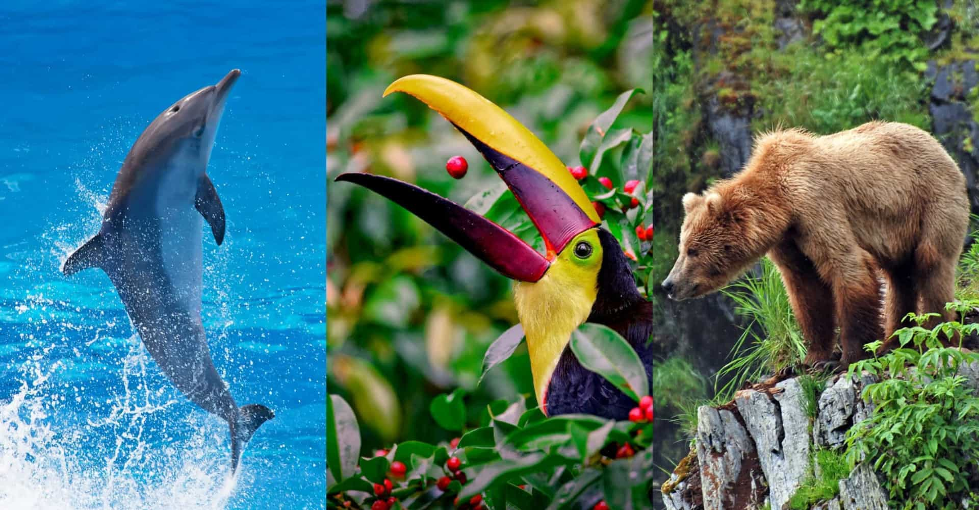 World Wildlife Day: 55 fun facts about wildlife that will surprise and delight you