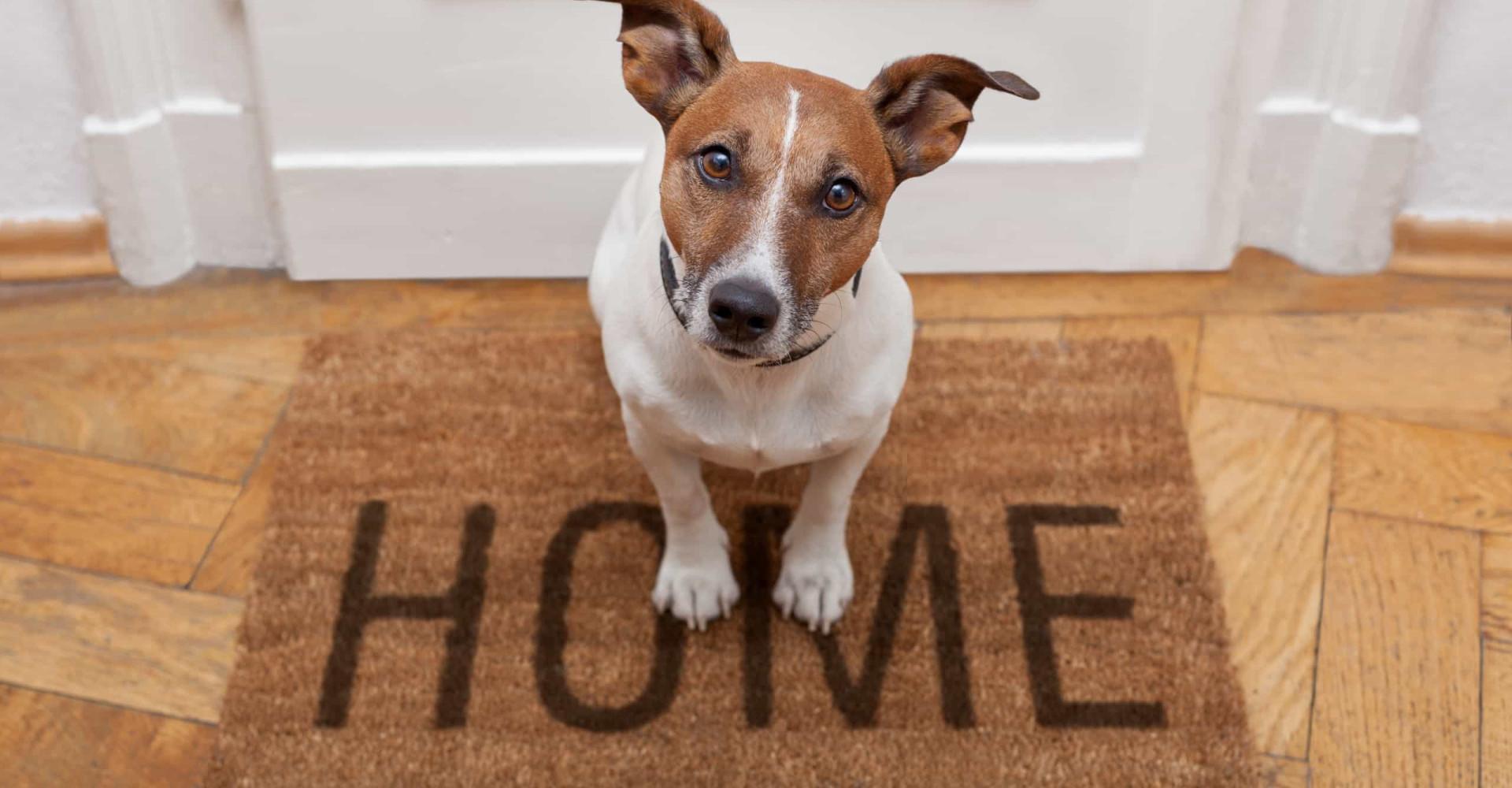 Protégez votre maison de vos animaux domestiques