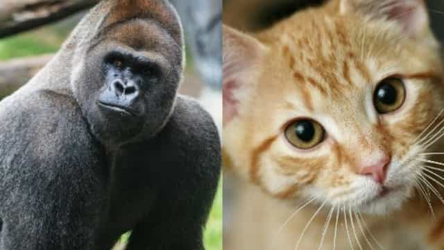 Quanto vivono in media gli animali?