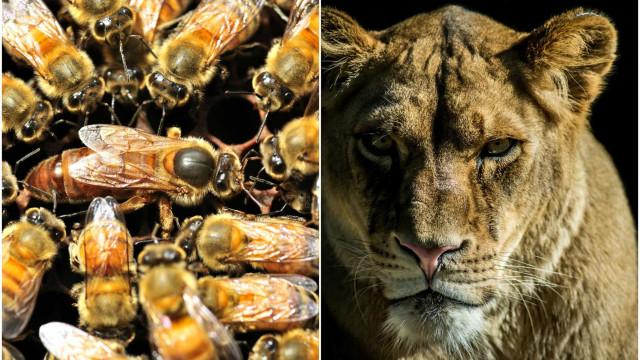 Girl-power anche nel regno animale, ecco le femmine più potenti