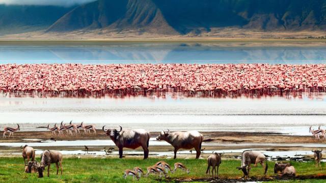 ¡Descubre 30 curiosidades espectaculares sobre Tanzania!