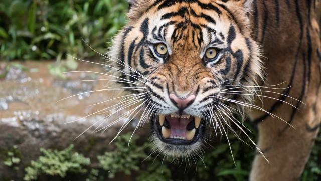 El reino animal en 30 increíbles curiosidades, ¿te atreves a verlas?