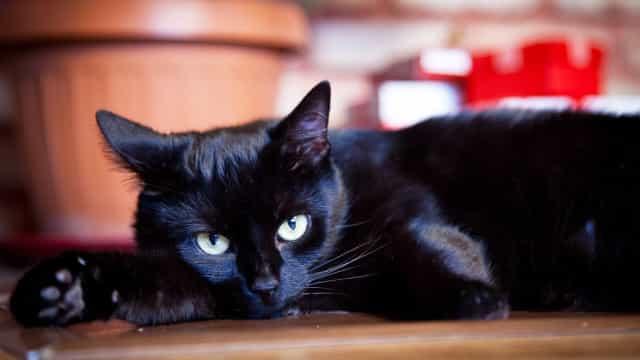 Zijn kattenmensen intelligenter dan hondenmensen?