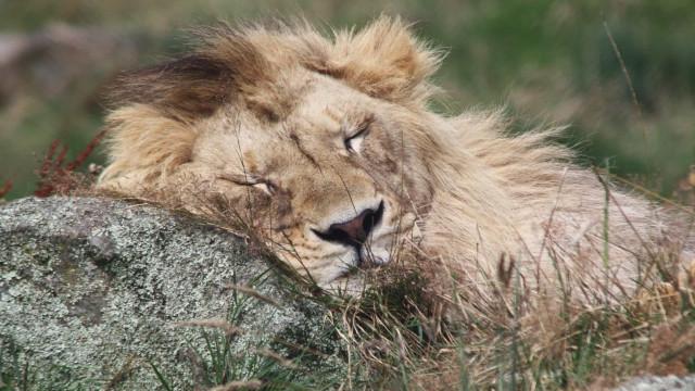 A buen sueño, no hay mala cama: los peculiares hábitos de sueño de los animales