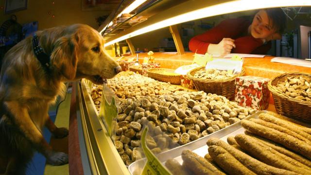Hier sind Hunde König: Deutschlands Hundebäckereien