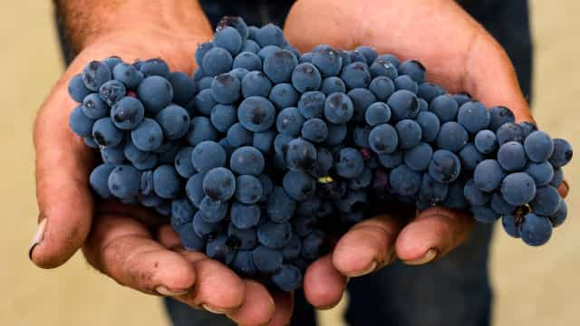 There is a new type of wine that is naturally blue