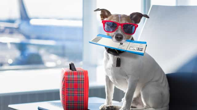 Everything you need to know about flying with your dog in the US
