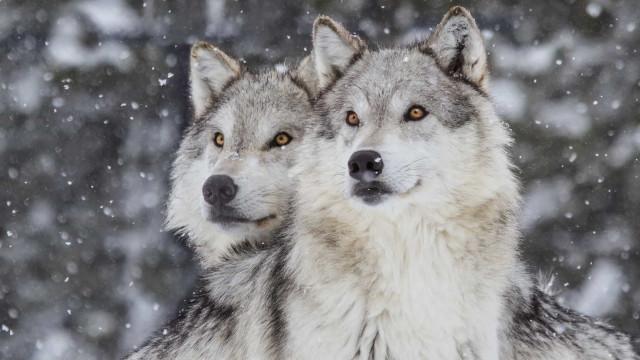 Monogamia tra animali: quando l'amore è eterno!
