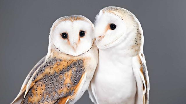 Romantikken lever endnu! Følgende dyr bliver sammen hele livet