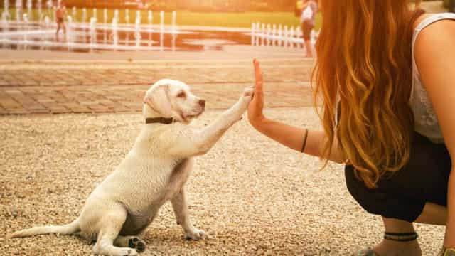 Waarom een puppy je leven verrijkt