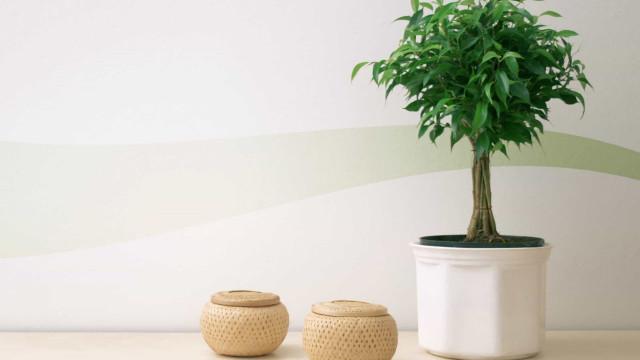 Las mejores plantas para purificar el aire del hogar