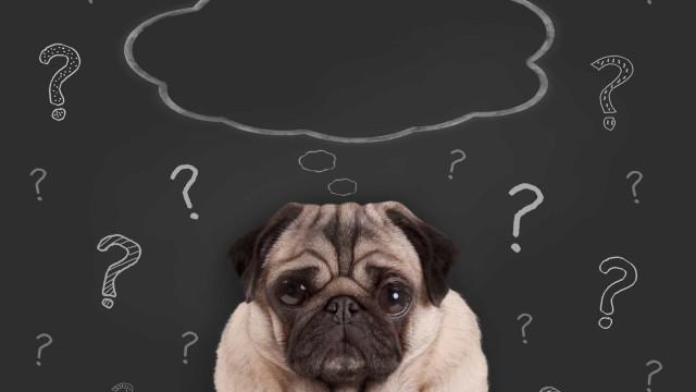 Los perros también padecen Alzheimer: ¿sabes cómo actuar?