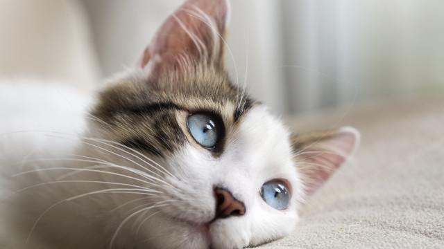 Les chats préférés des Français