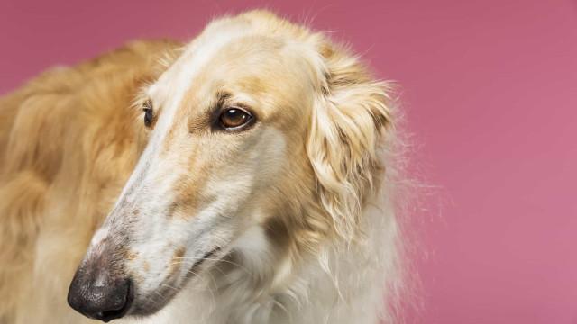 Die merkwürdigsten Hunderassen der Welt