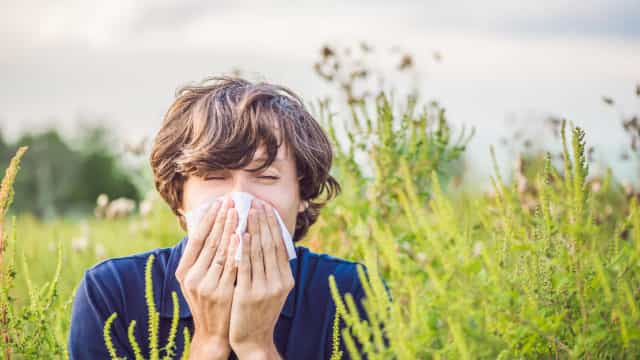 Hausse des quantités de pollens: les gestes qui sauvent