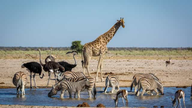 Si la vida salvaje te llama, ¡uno de estos safaris es para ti!