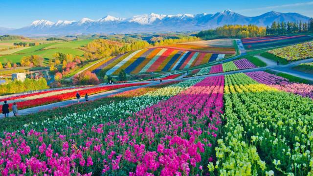 Alles blüht: Die besten Reiseziele für Blumenliebhaber