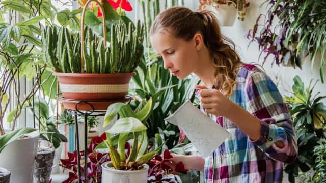 室内植物のケアのコツ