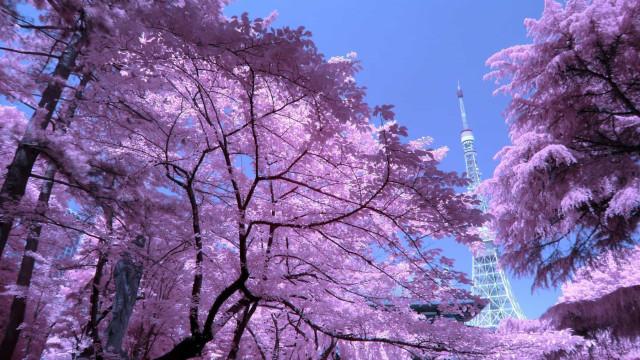 Un viaje virtual por Japón