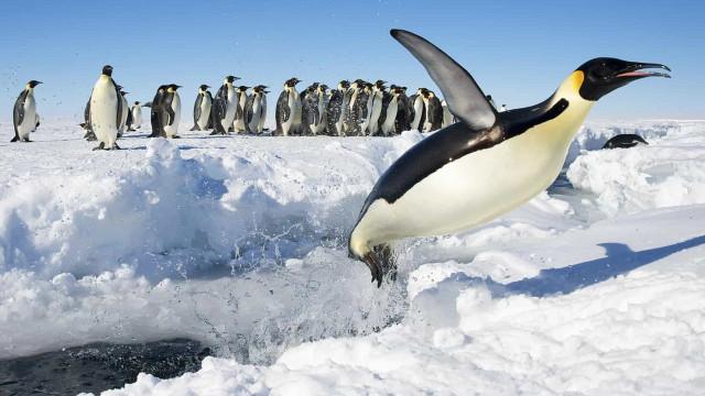 L'Antarctique, un superbe paysage de glace