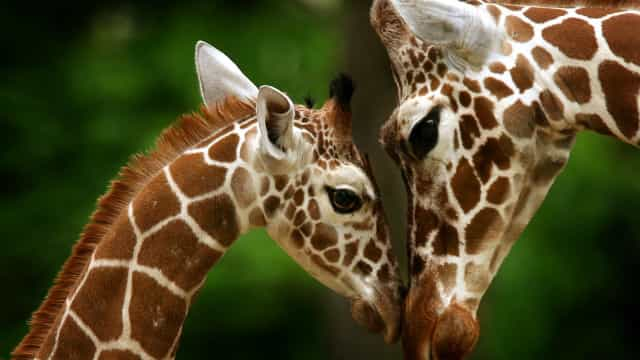 Motherly love: adorable animal moms and their babies