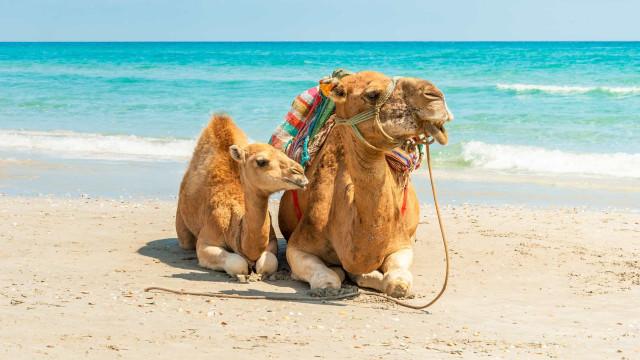 Resmålen i Nordafrika som man bör besöka åtminstone en gång i livet